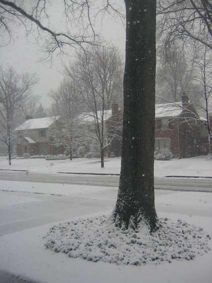 snowymonday.jpg