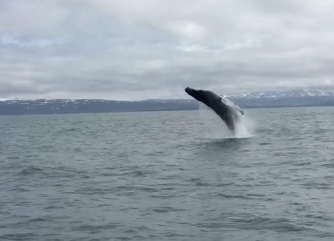 kate_whale