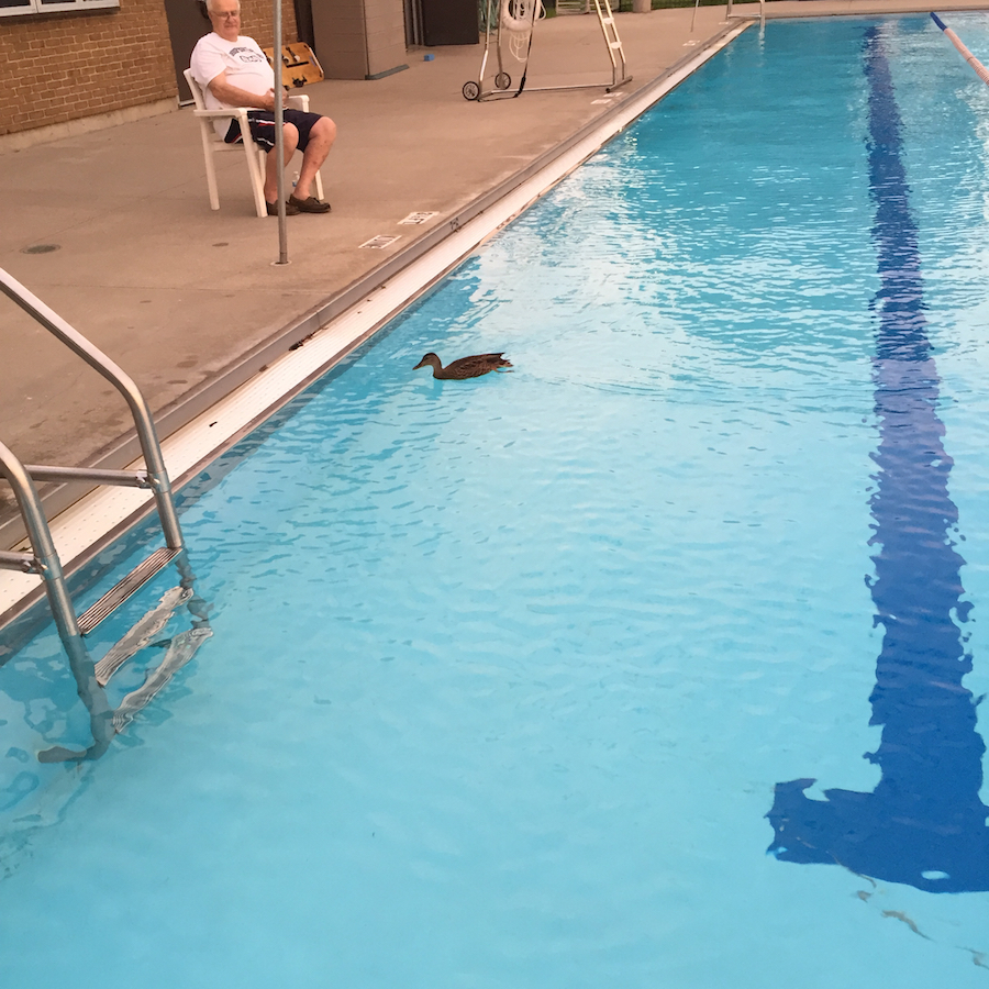duckswimming
